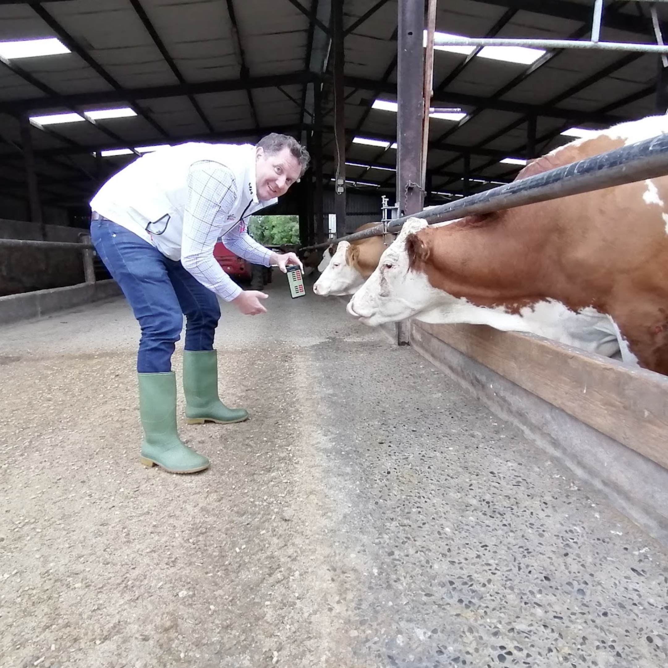 Diarmaid showing a cow the new Concept Dairy app